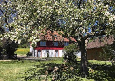 Ferienhaus Brestenberg: Der Garten im Frühling mit blühenden Bäumen