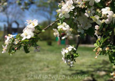 Ferienhaus Brestenberg: Apfelblüte im Garten