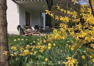 Ferienwohnung Kinzigtal: Die Terrasse mit Liegestühlen und blühenden Forsythien