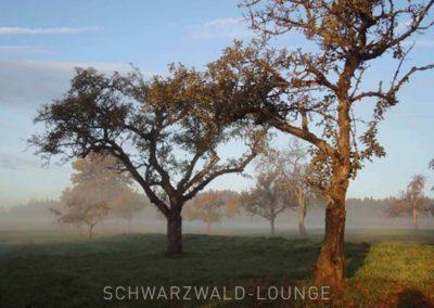 Chalet Lindenbuch: Blick auf Wiese und Bäume im Morgendunst
