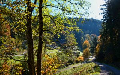 "Wanderweg ""Klösterle-Schleife"" in Bad Rippoldsau"